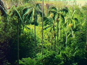 Fern Tree Pool and Giant's Chair Circuit - Melbourne Tourism