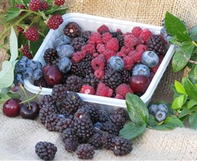 Bright Berry Farms - Melbourne Tourism