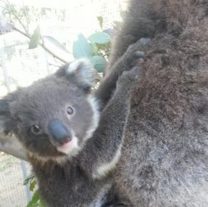 West Oz Wildlife Petting Zoos - Melbourne Tourism